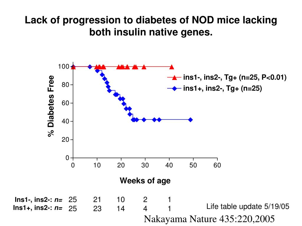 Lack of progression to diabetes of NOD mice lacking both insulin native genes.