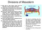 divisions of mesoderm
