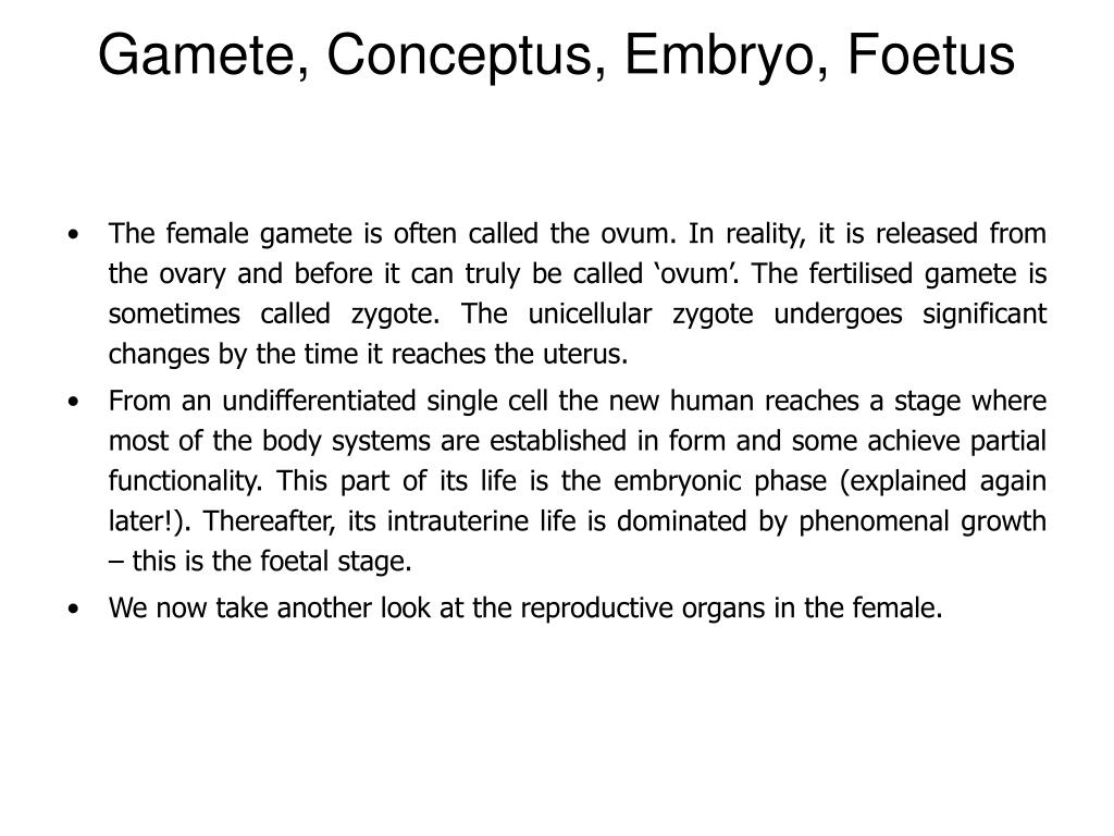 Gamete, Conceptus, Embryo, Foetus