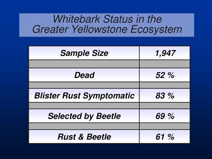 Whitebark Status in the