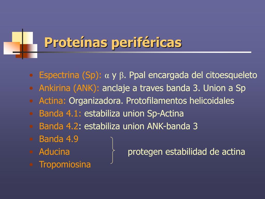 Proteínas periféricas
