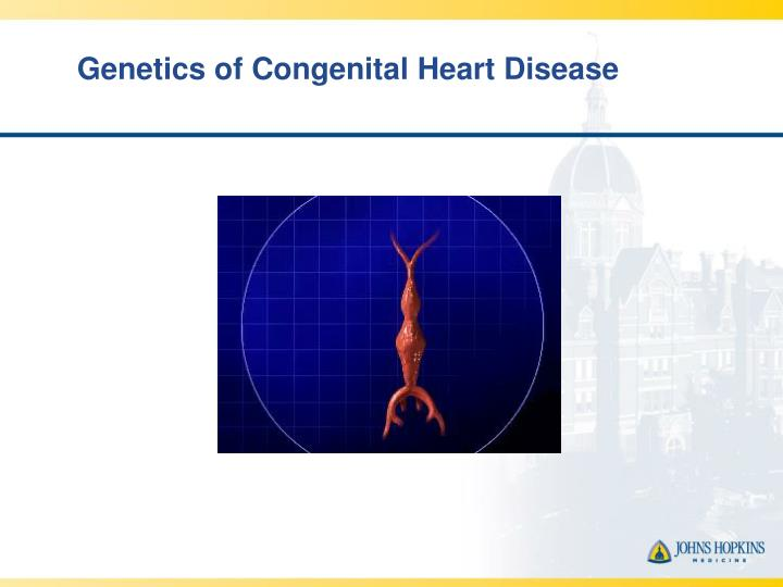 Genetics of congenital heart disease l.jpg