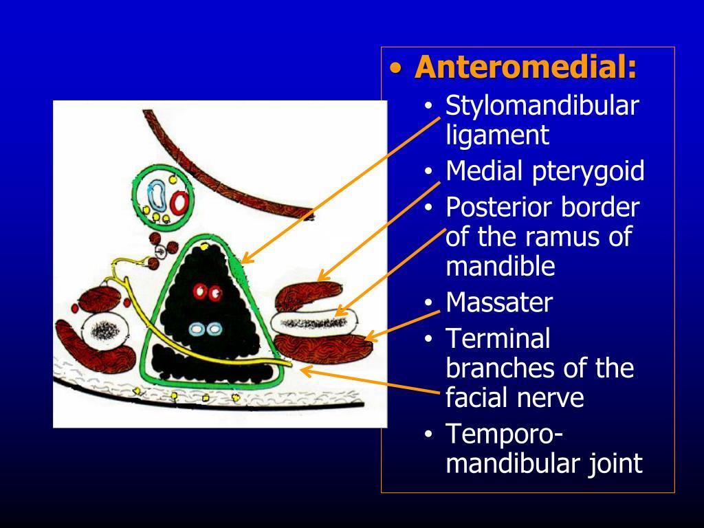 Anteromedial