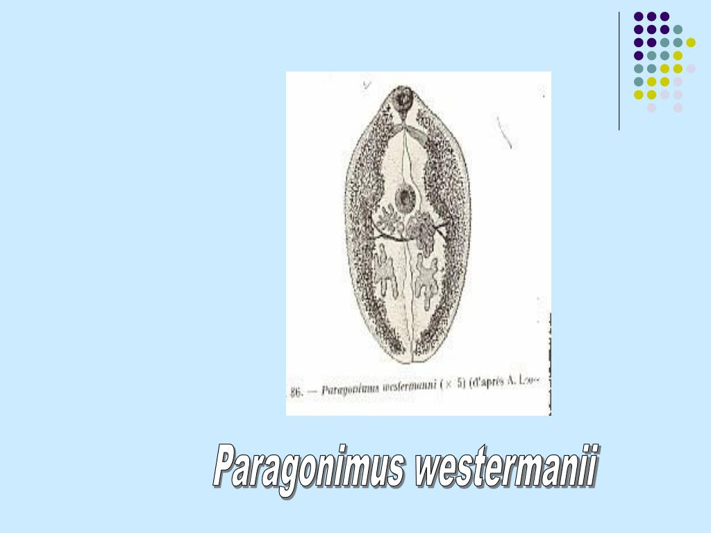 Paragonimus westermanii