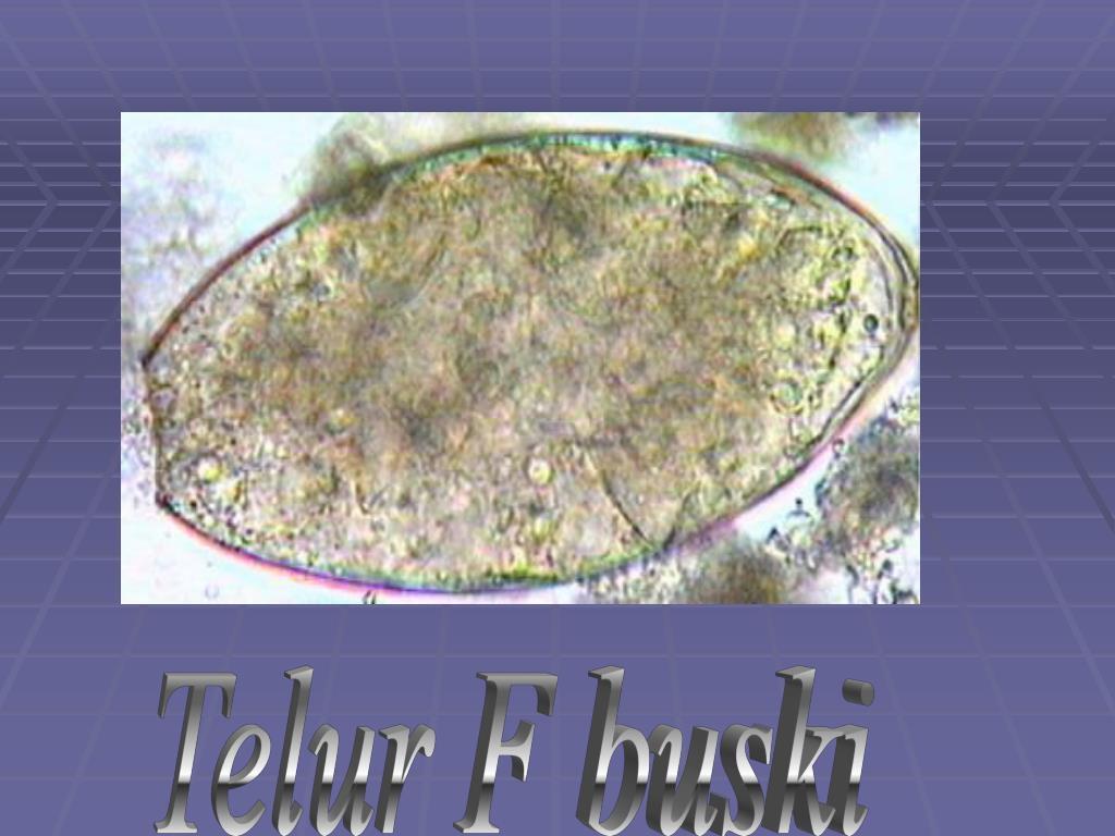 Telur F buski