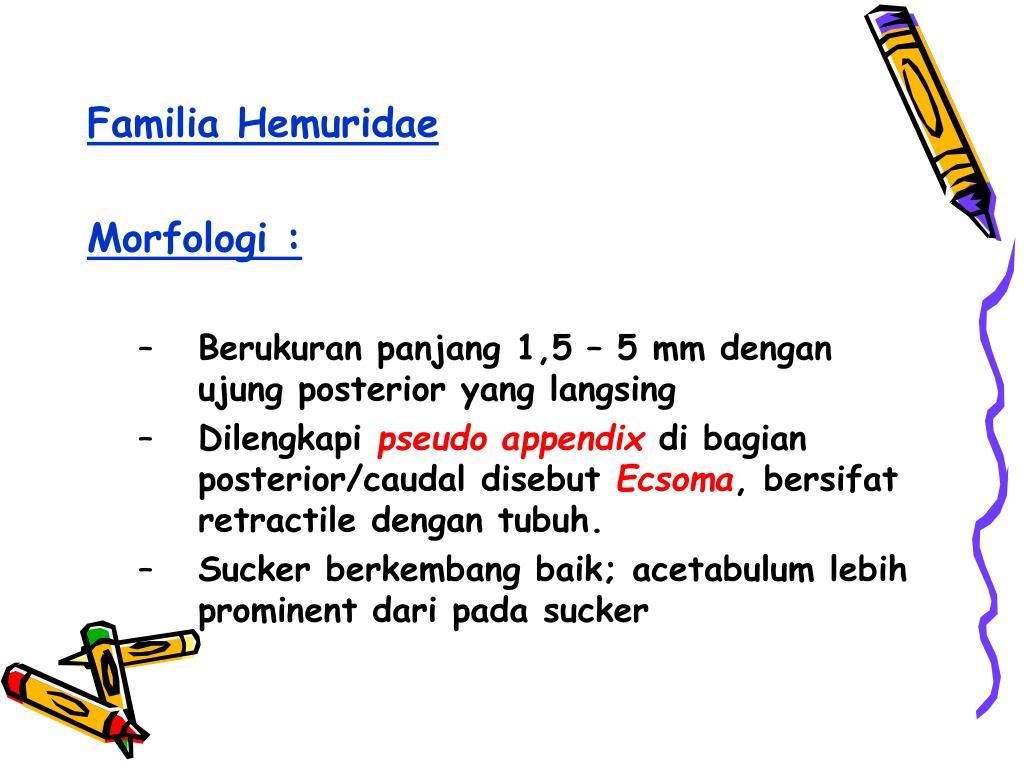 Familia Hemuridae