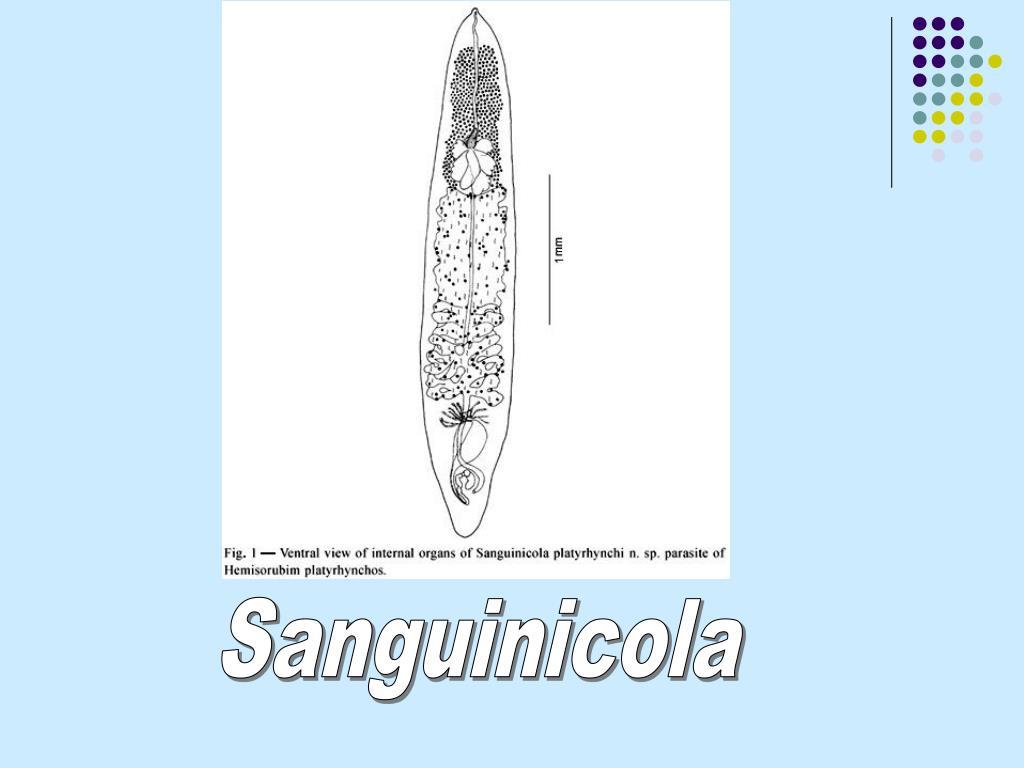 Sanguinicola