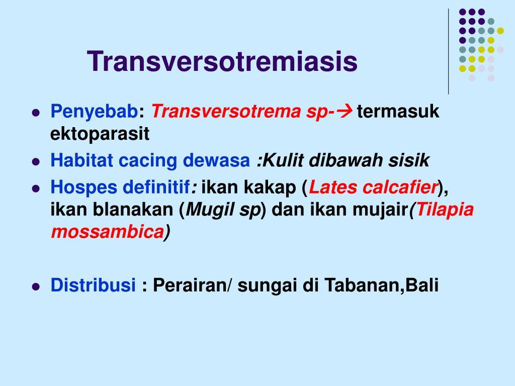 Transversotremiasis