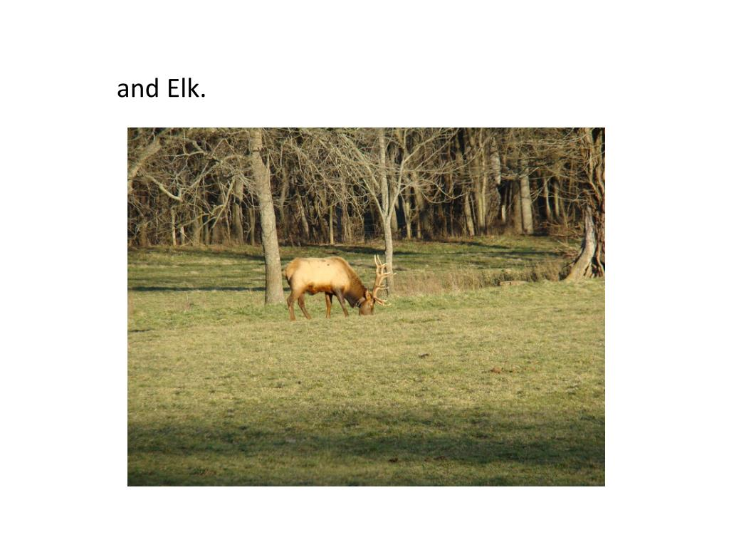 and Elk.