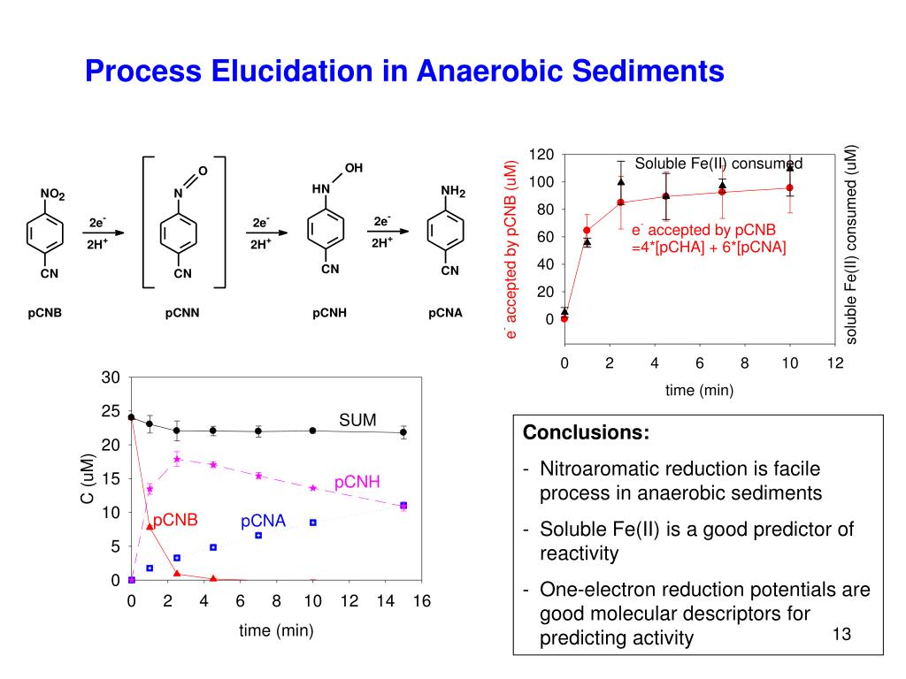 Process Elucidation in Anaerobic Sediments