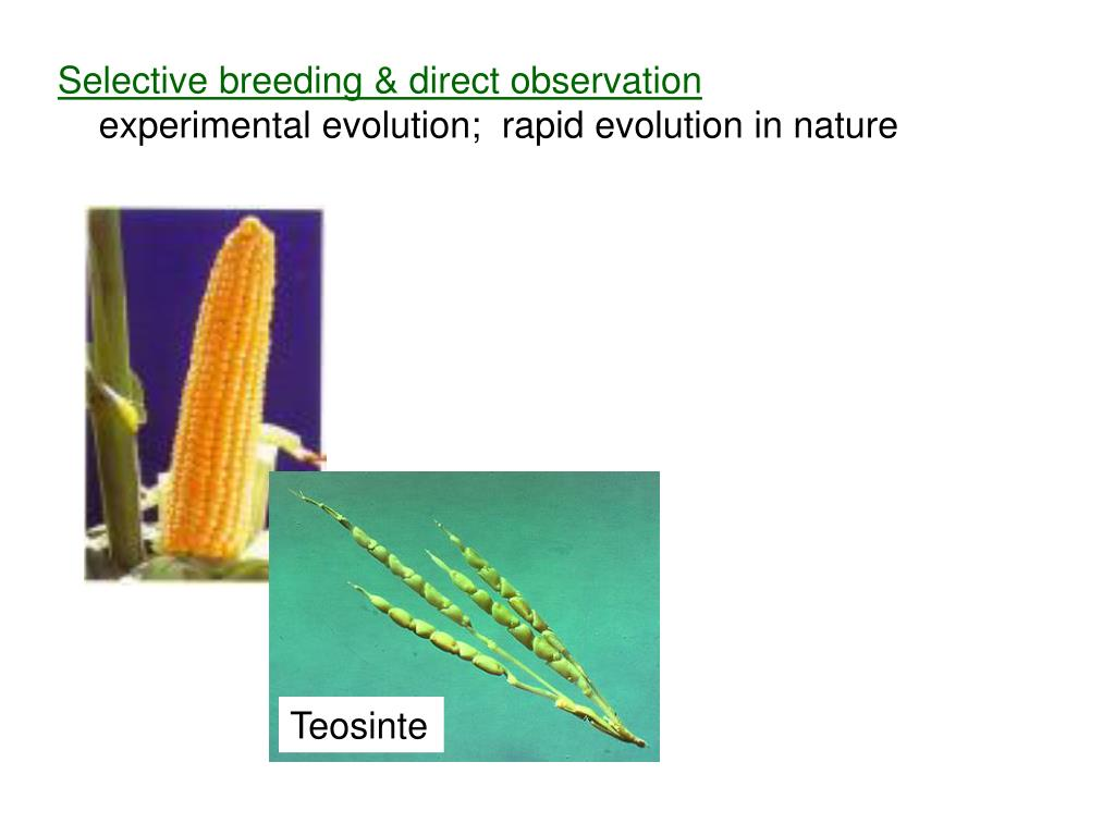 Selective breeding & direct observation