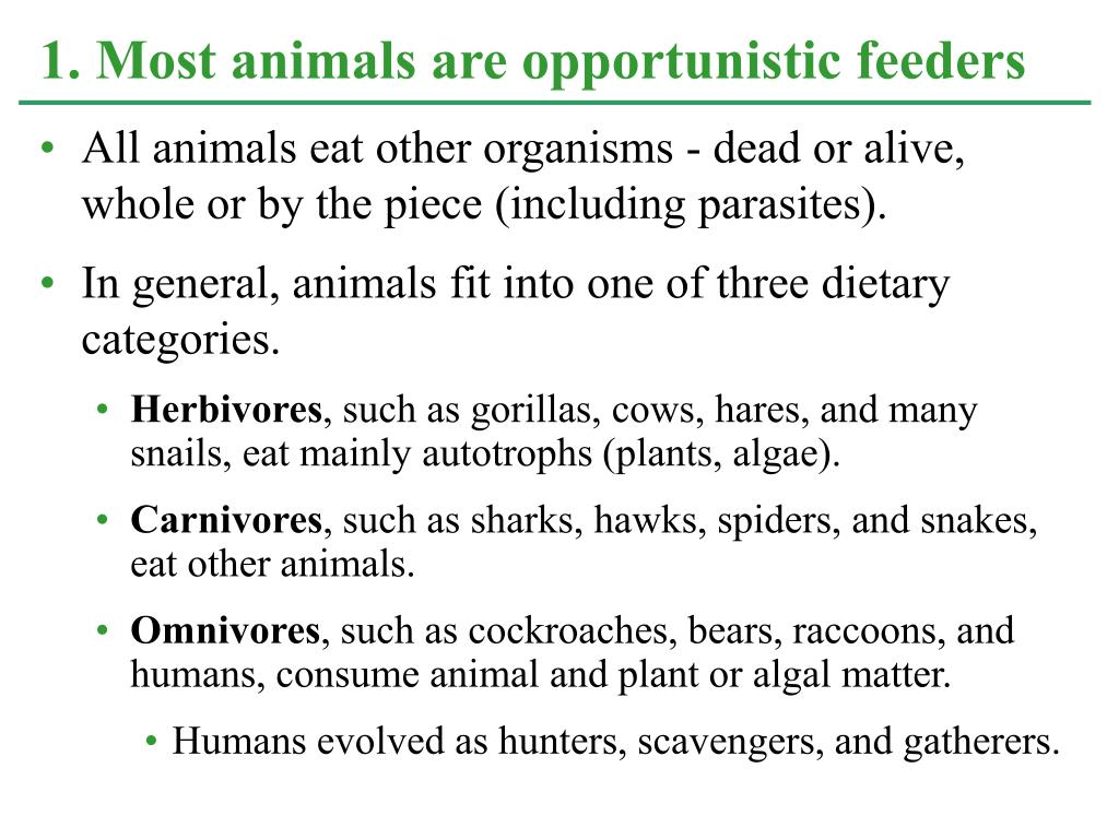 All animals eat other organisms - dead or alive, whole or by the piece (including parasites).
