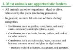 1 most animals are opportunistic feeders