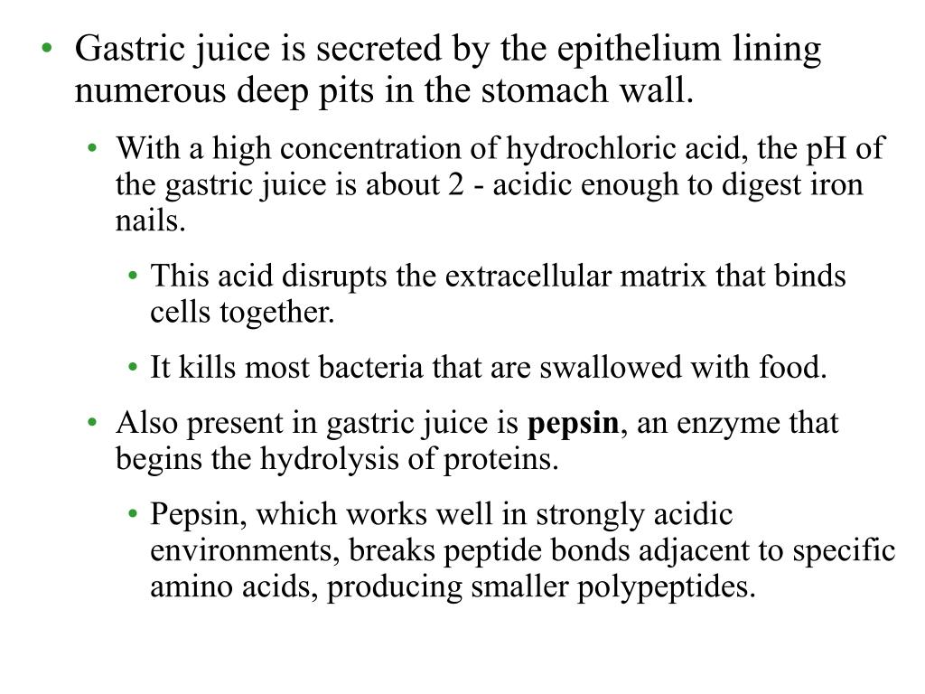 Gastric juice is secreted by the epithelium lining numerous deep pits in the stomach wall.