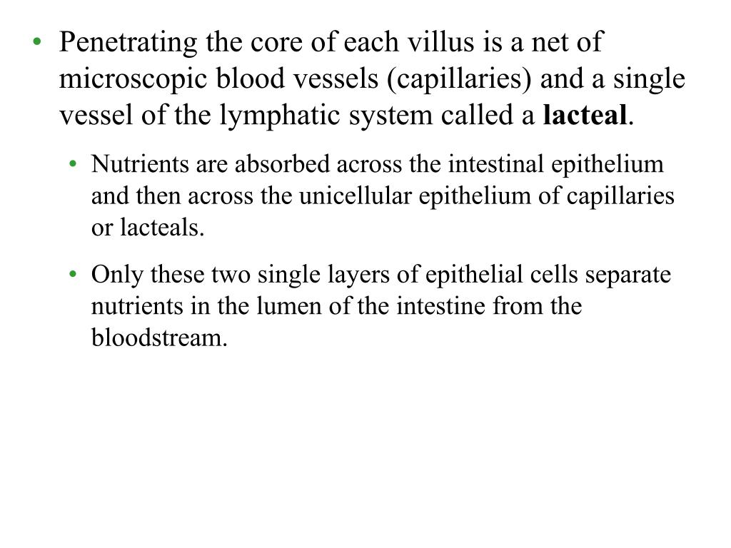 Penetrating the core of each villus is a net of microscopic blood vessels (capillaries) and a single vessel of the lymphatic system called a