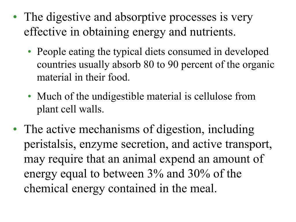 The digestive and absorptive processes is very effective in obtaining energy and nutrients.