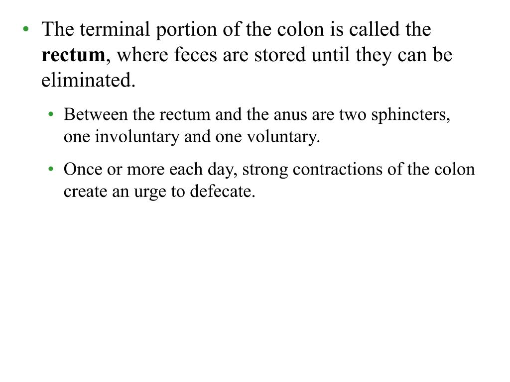 The terminal portion of the colon is called the
