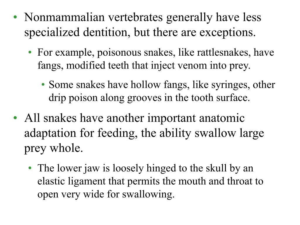 Nonmammalian vertebrates generally have less specialized dentition, but there are exceptions.