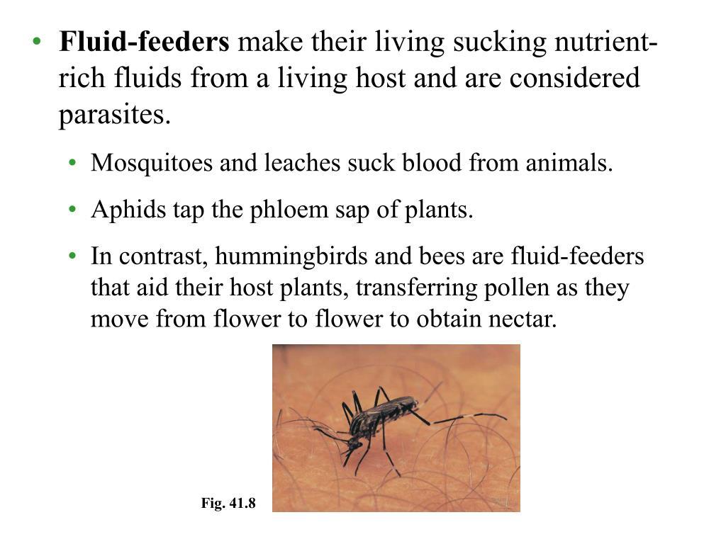 Fluid-feeders