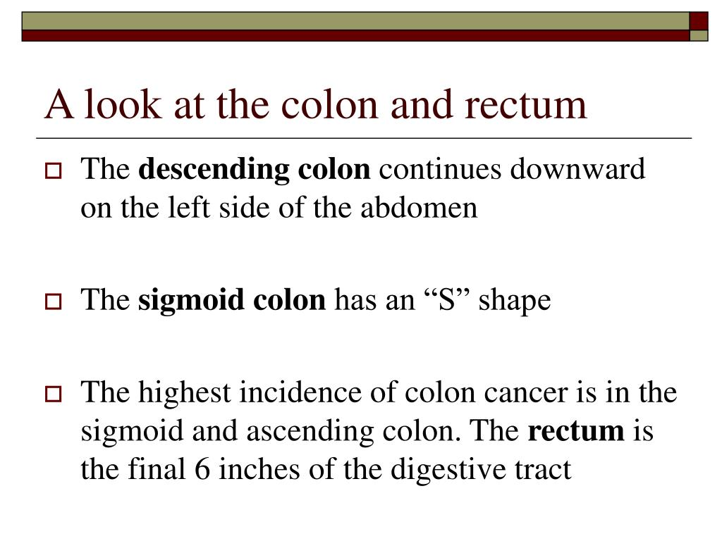 A look at the colon and rectum
