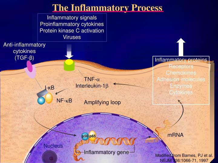 The Inflammatory Process