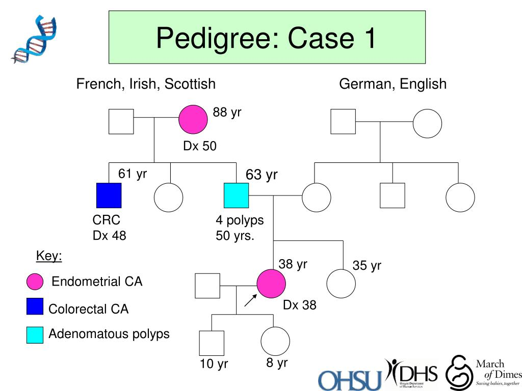 Pedigree: Case 1