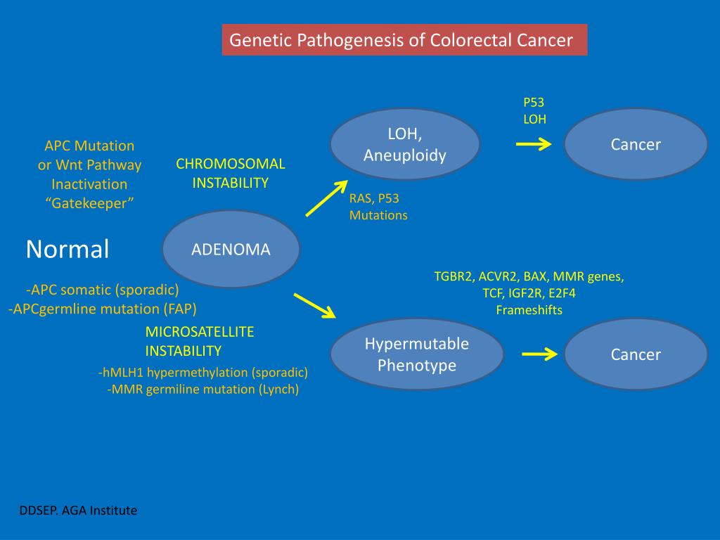 Genetic Pathogenesis of Colorectal Cancer