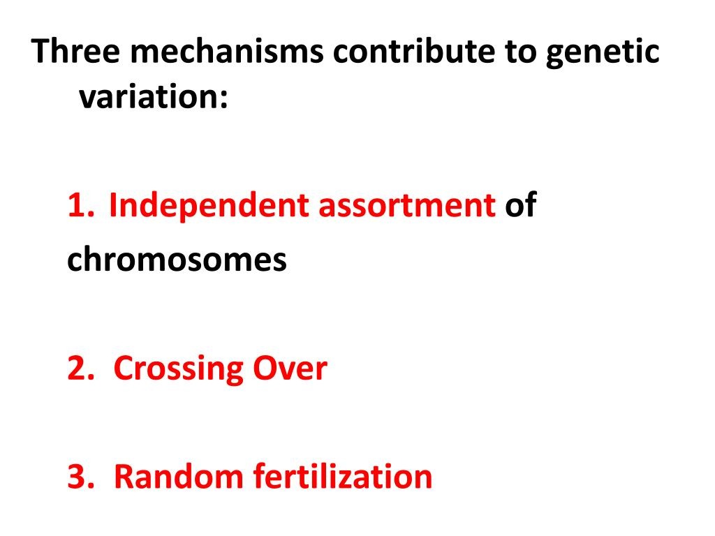 Three mechanisms contribute to genetic variation: