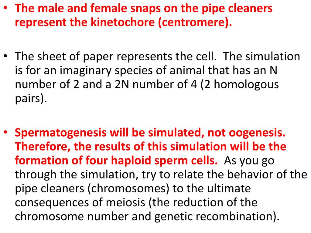 The male and female snaps on the pipe cleaners represent the