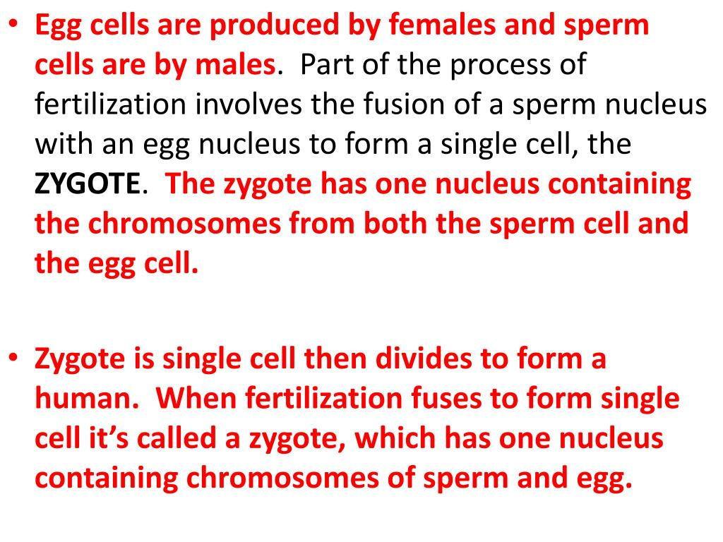 Egg cells are produced by females and sperm cells are by males