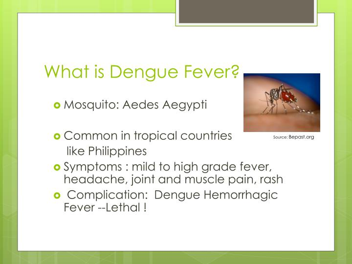 What is dengue fever l.jpg