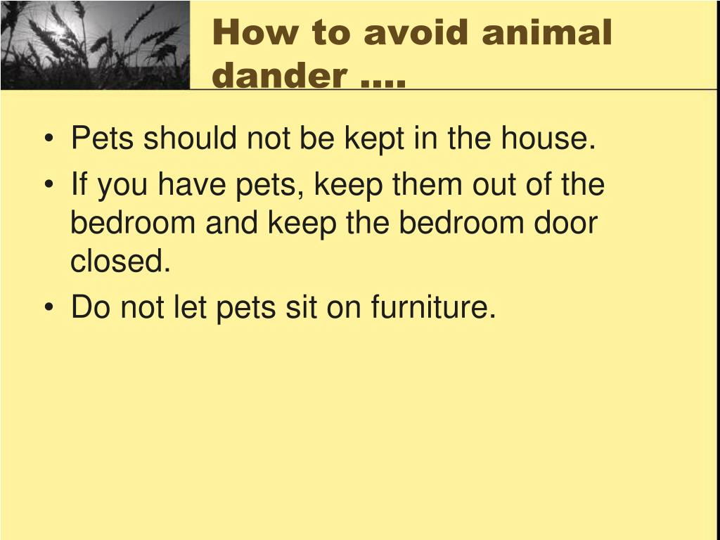 How to avoid animal dander ….