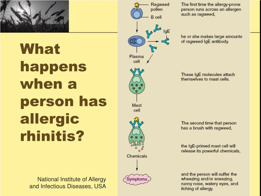 What happens when a person has allergic rhinitis?