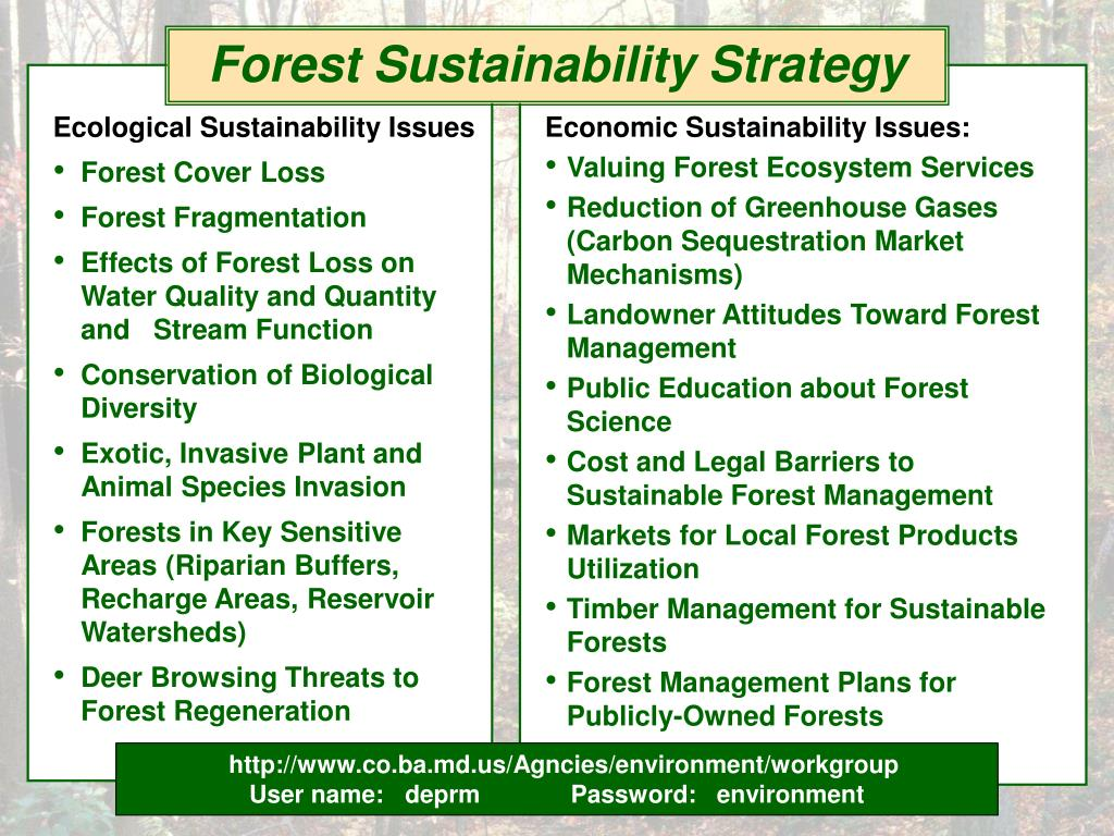 Forest Sustainability Strategy