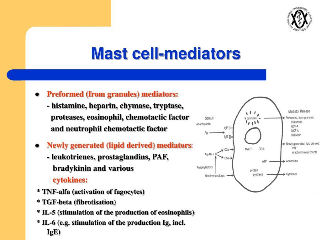 Mast cell-mediators