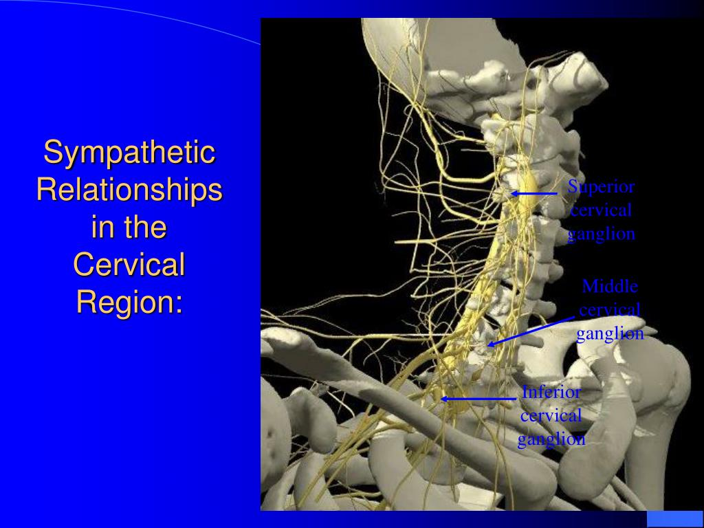 Sympathetic Relationships in the Cervical Region: