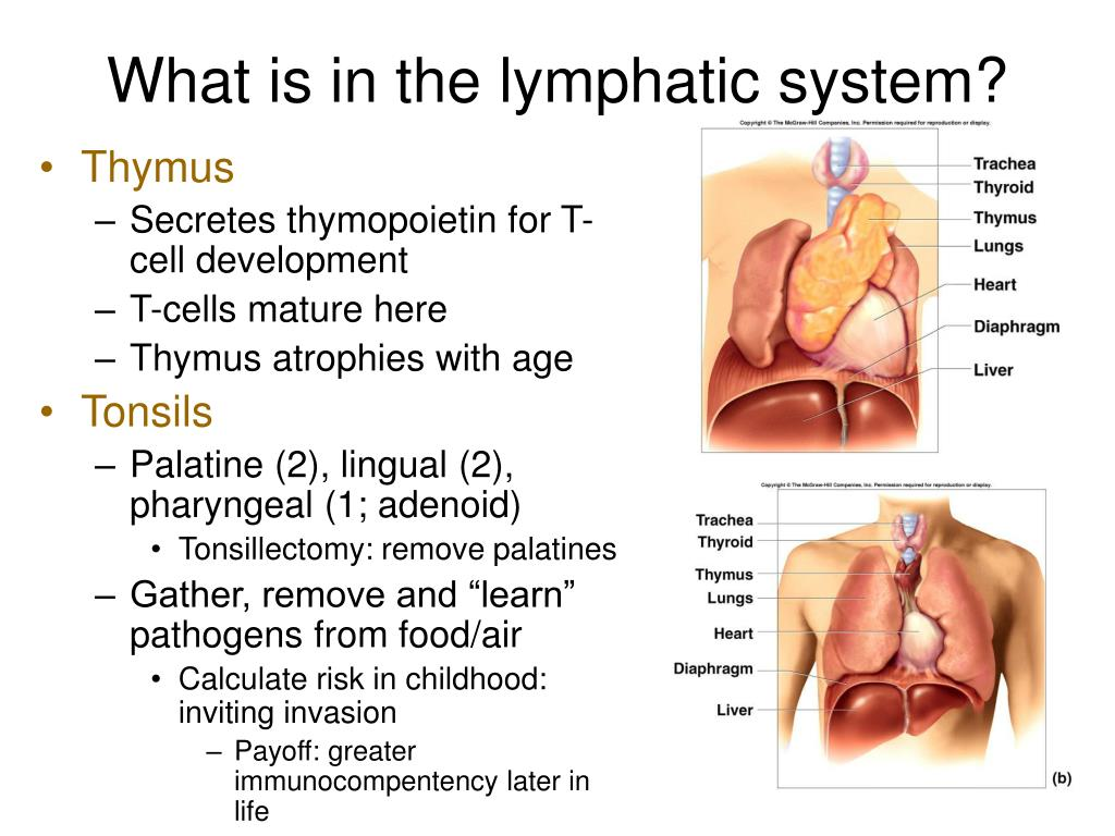 What is in the lymphatic system?