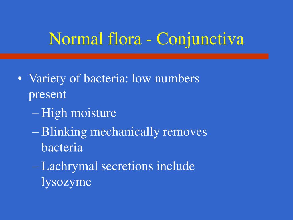 Normal flora - Conjunctiva