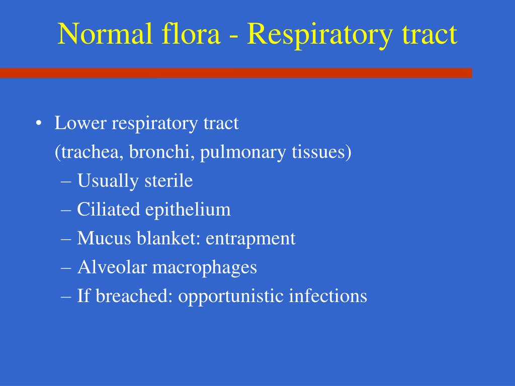 Normal flora - Respiratory tract