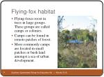 flying fox habitat