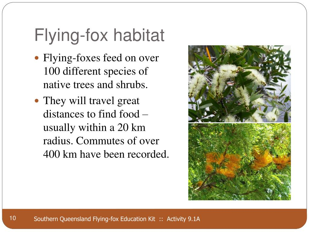 Flying-fox habitat