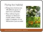 flying fox habitat10