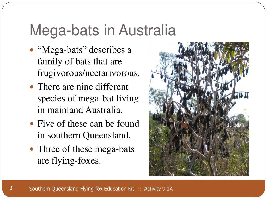 Mega-bats in Australia