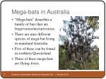 mega bats in australia