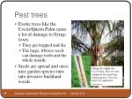 pest trees