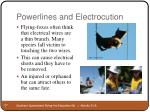 powerlines and electrocution