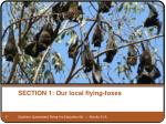 section 1 our local flying foxes