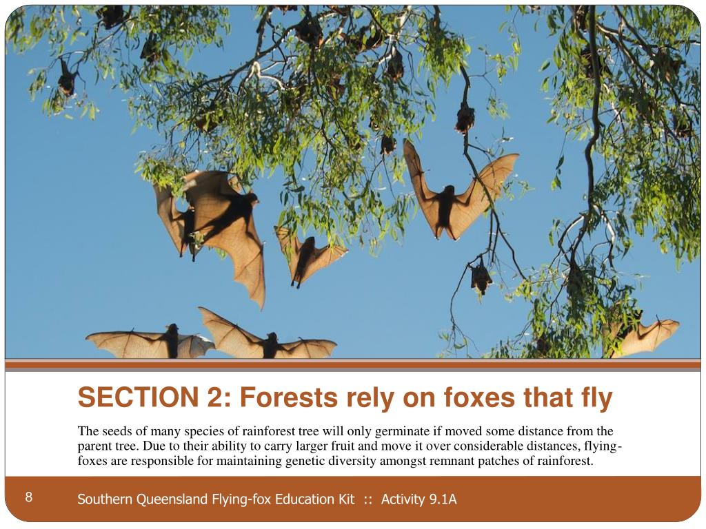 SECTION 2: Forests rely on foxes that fly