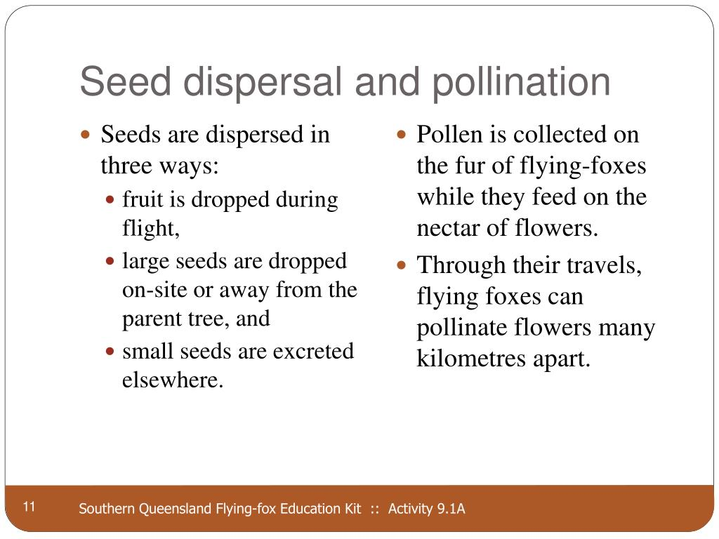 Seed dispersal and pollination
