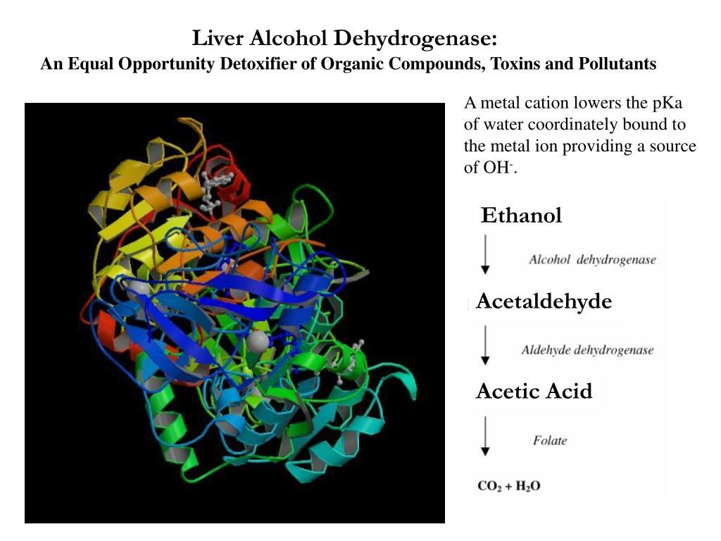 Liver Alcohol Dehydrogenase: